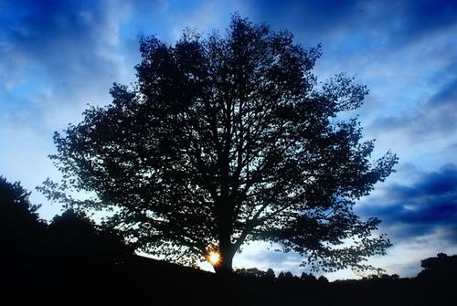 菩提樹2.jpg